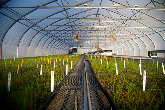 Profeta farms greenhouse with plants in the spring